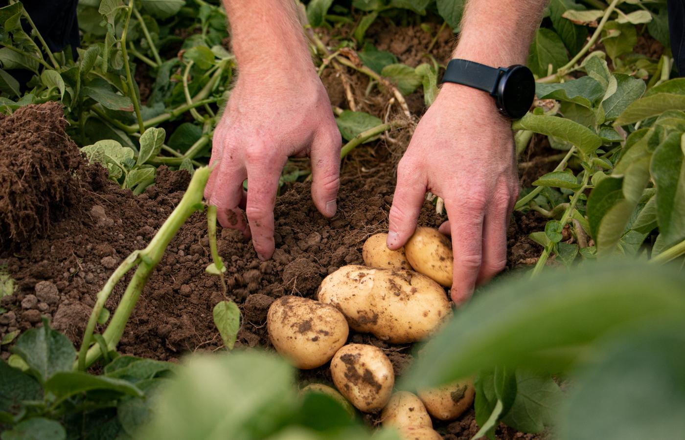 Schmid Kartoffeln