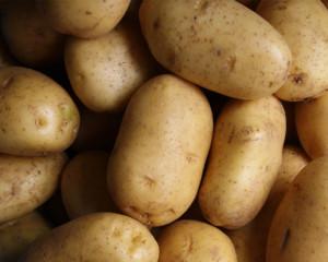 Kartoffeln Schmid Schlattingen