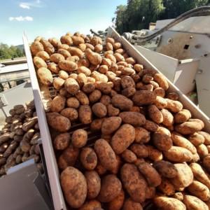 Schlattingen Kartoffel Schmid